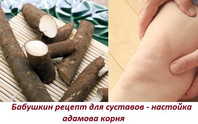 Адамов корень лечение артроза -