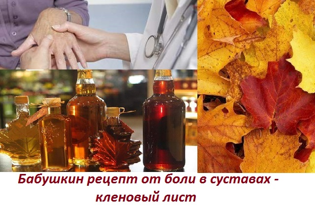 Лечение суставов кленовыми листьями. Лечение иммунитета, болей в коленных суставах отваром кленовых листьев.