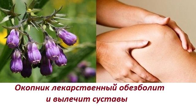 Окопник лекарственный применение для суставов отзывы