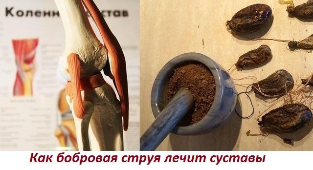 Применение бобровой струи при лечении артроза и артрита