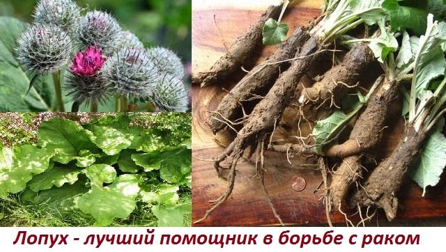 И рак пятится назад: лечебные травы при онкологии