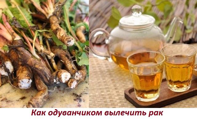 Как приготовить чай из одуванчика от рака
