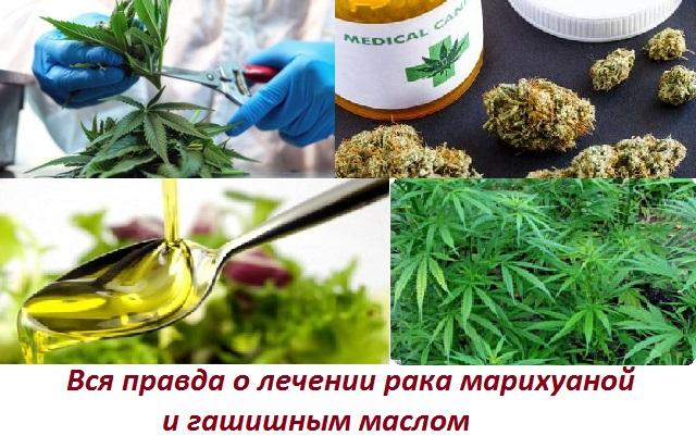 Лечение рака конопляным маслом по методу Симпсона