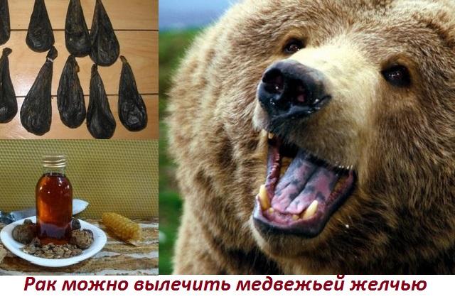 лечение рака медвежьей желчью