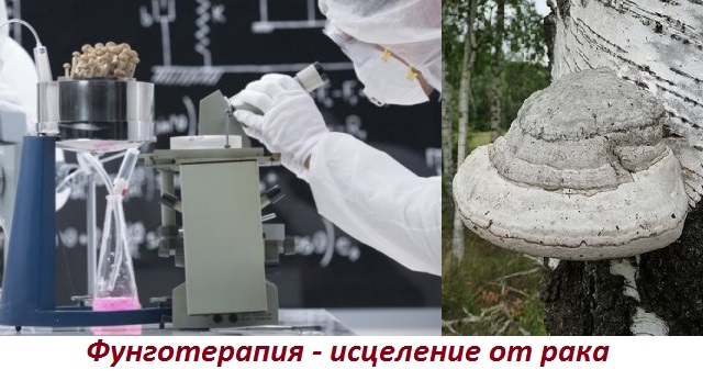 Лечение рака лекарственными грибами
