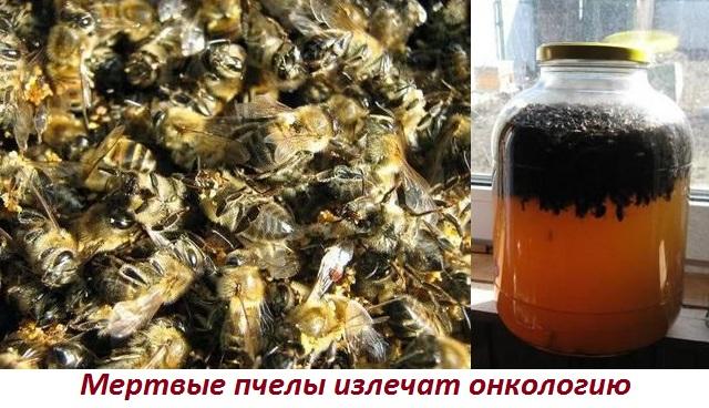 Лечение пчелиным подмором рака предстательной железы
