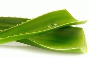 Алоэ для кожи лица и тела, полезные свойства и противопоказания