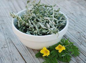 Гусиные лапки трава полезные свойства. Лечебные свойства и сферы применения лапчатки гусиной